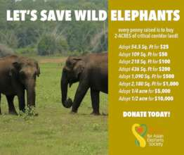 Adopt a Piece of Land and Help Save Elephants