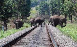 Railway tracks cutting through the forest