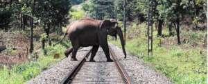 The Kerala Corridor Project 4 Wild Asian Elephants