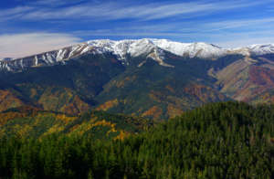Natural forest of the Fagaras Mountains