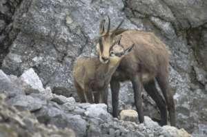 Protect Biodiversity in Romania