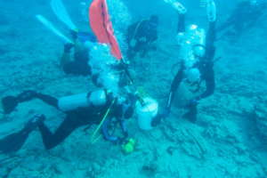 ODA-HI Oahu crew removes fishing line from coral.