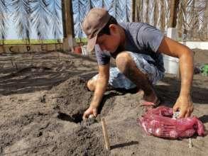 Jorge Mario burying an olive ridley nest