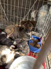 abonded mum with puppies