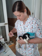 puppy getting vaccinated
