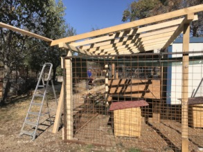 roof build above a kennel full of puppies