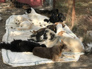 castrated dogs in an awake kennel