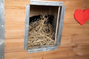 save place in a doghouse with straw