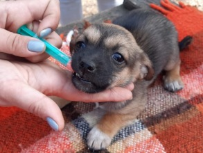 deworming of a puppy