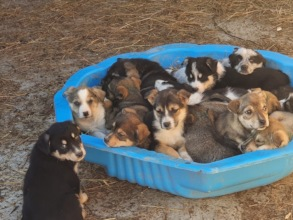 new arrived puppies in January