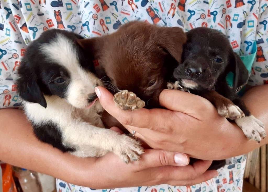 Puppy Flood 2019 in Public Shelter Bucov