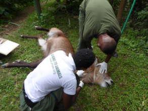 Protect Wildlife by Educating Poor Communities