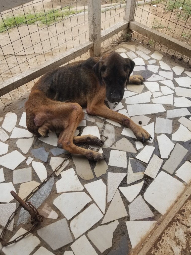 Rescue project for 900 dogs & cats in Accra.