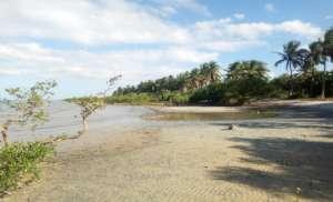 Mangrove area destroyed in Vilankulo