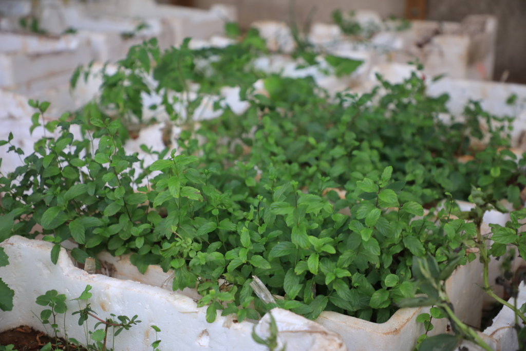 Organic Farming in Palestinian Refugee Camps