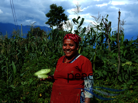 Ag broadcasts, training, inputs aid Nepal famers