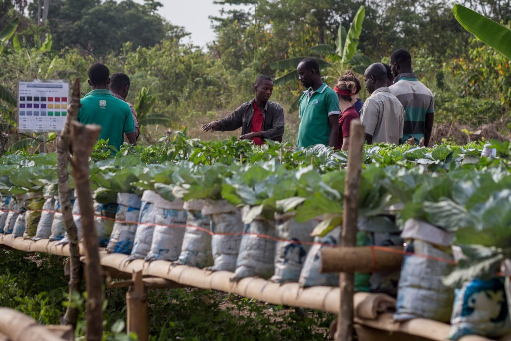 Develop Young Agribusiness Entrepreneurs in Ghana