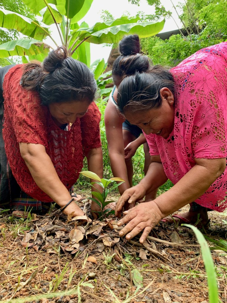 Planting fruit trees for Guatemalan families