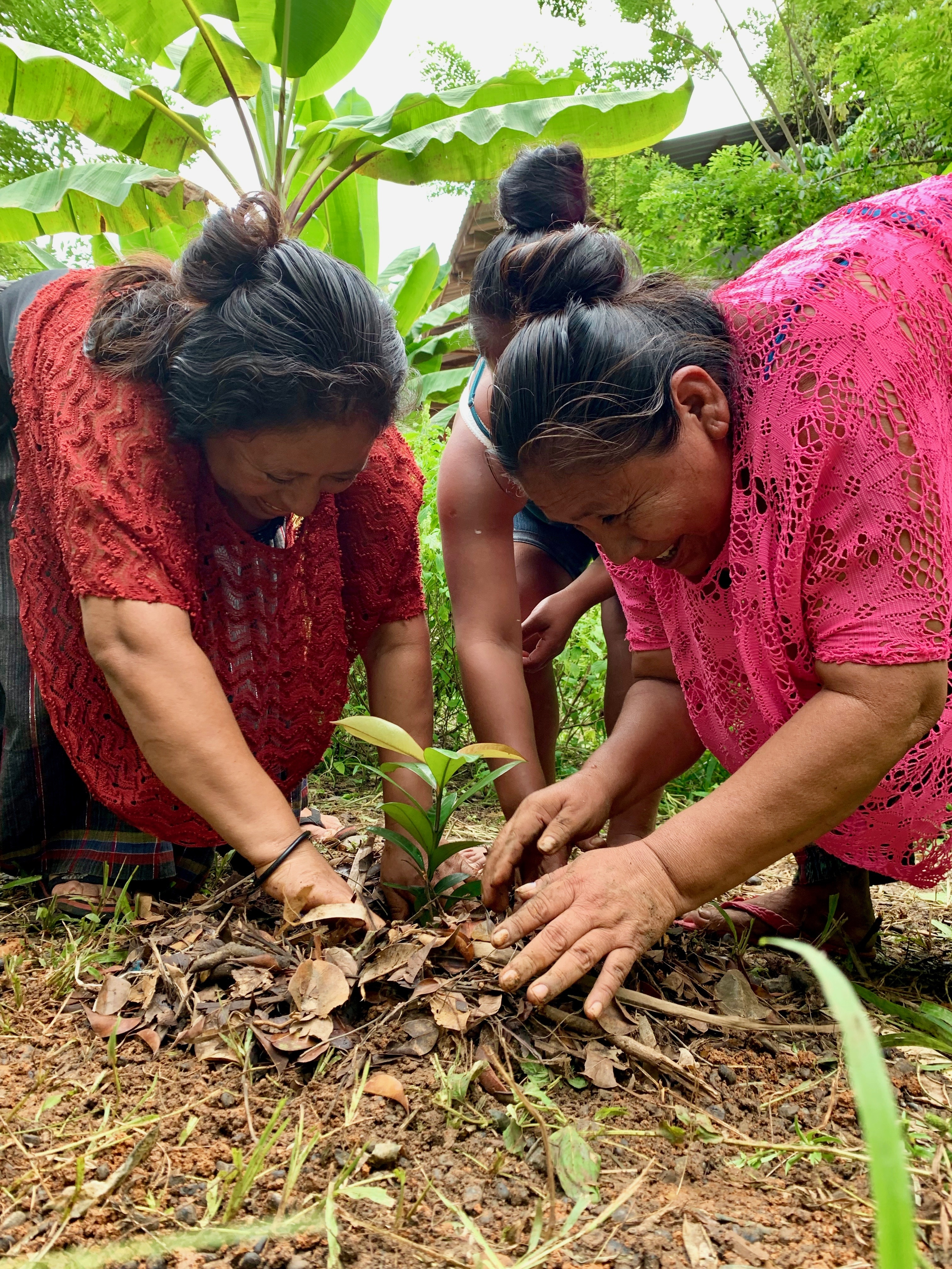 Planting Fruit Trees For Guatemalan Families Globalgiving