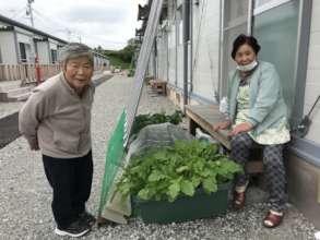 Elderly survivors enjoying growing vegetables!