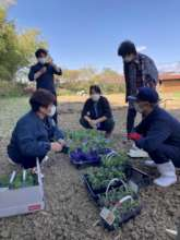 Project team checking the seedlings.
