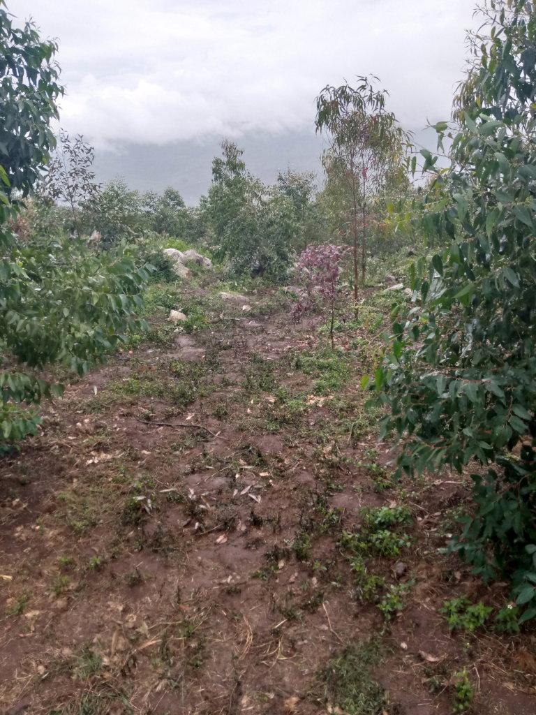 MTAJI PROJECT (Tanzania mainland)