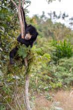 Micah enjoys practicing his climbing skills
