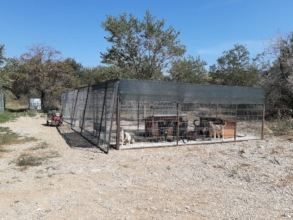 new kennels in Bucov