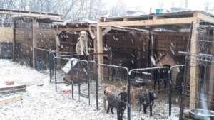 puppies in wintertime
