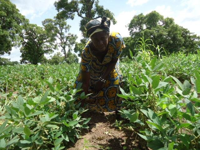 Food Security for 1,000 women farmers in Ghana