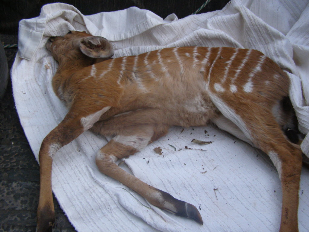 Help Wildlife With Emergency Medical Treatment