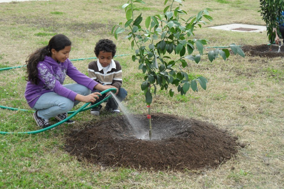 Let's teach kids about fruit trees!