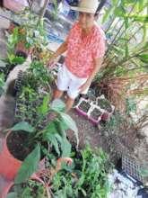 Community Member caring for seedlings from home