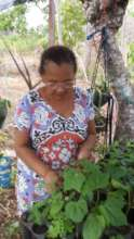 Native and fruit tree species production from home