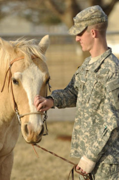 Horses for Veterans and First Responders with PTSD