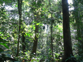 Our partners are protecting valuable rainforest