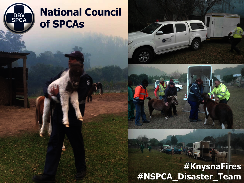 Help the NSPCA raise disaster funds for 2020