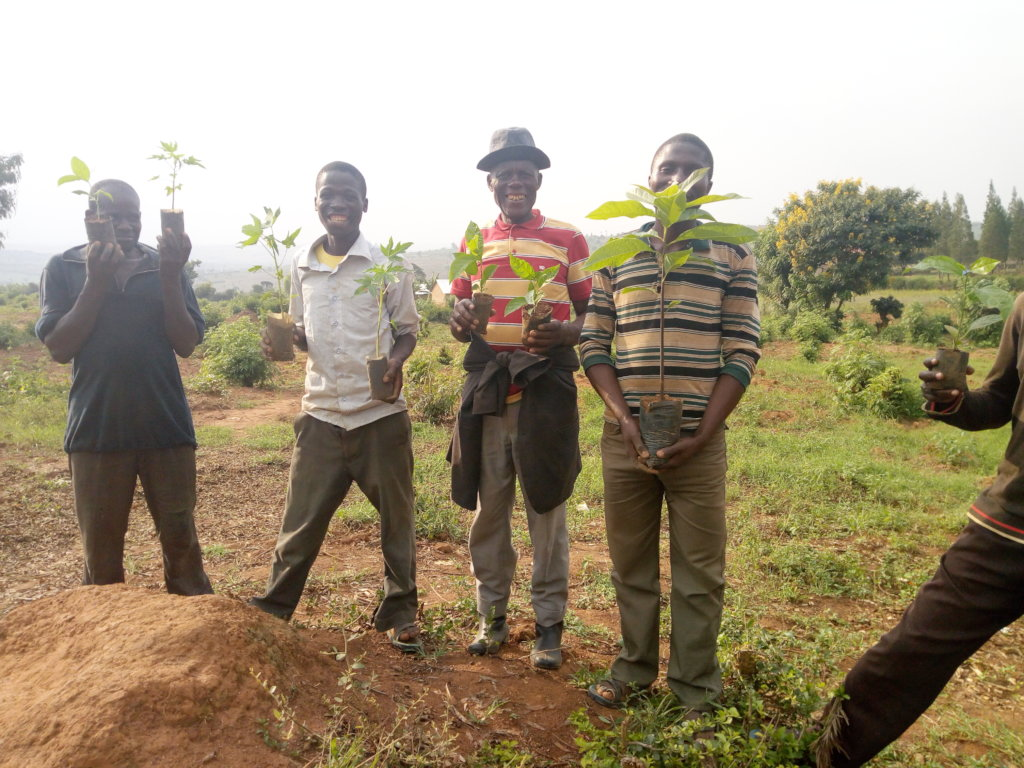 HELP TO ENHANCE PREVENTING POVERTY WITH TREES