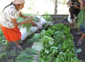 Hortalizas organicas - Organic agriculture