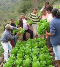Agriculture training - Capacitacion agricola