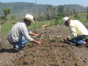 Agricultura sustentable - Sustainable agriculture
