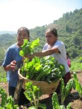 Hortalizas organicas - Organic production