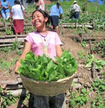 Hortalizas biointensivas - Biointensive farming