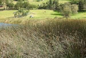 Apolinar's Wren Habitat - Habitat del Cucarachero