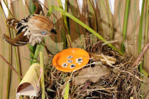 Stop-motion to educate, Apolinar's Wren food