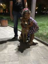 Give Vulnerable Populations Access to Therapy Dogs