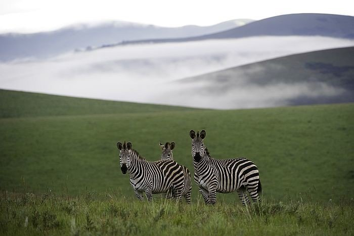 WILDLIFE CONSERVATION  SURROUNDING NYIKA RESERVE