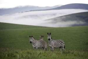 WILDLIFE CONSERVATION  SURROUNDING NYIKA RESERVE