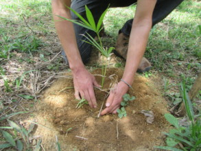 A trillion trees - one at a time