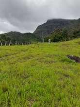 Lush pasture growth - a tough start!
